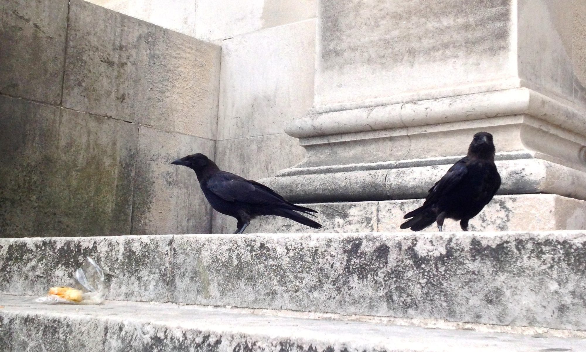 two crows on marble steps